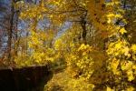 Желтая, желтая осень