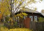 В Котельниче начался активный листопад грецкого ореха