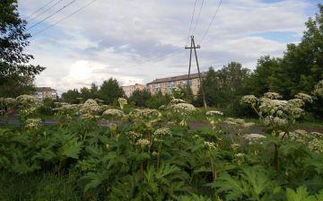 Ядовитые растения в городе