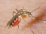 Бойтесь клещей и комаров