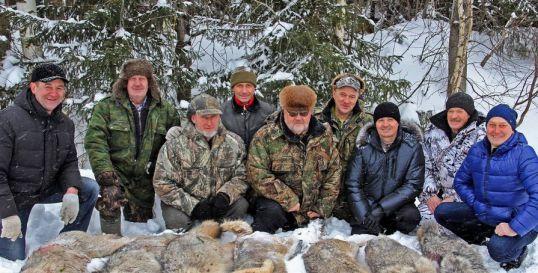 В Котельничском районе ликвидирована крупная стая волков